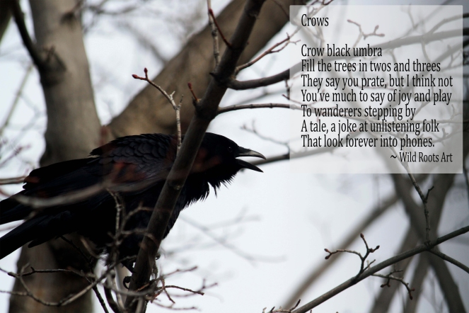 crow-poem-pic